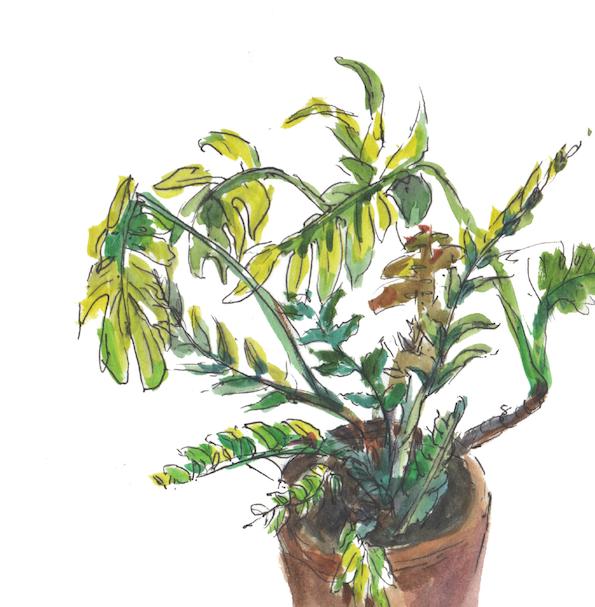 M - Plants 1-01