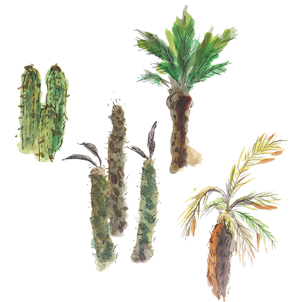 Various plants Marrakesh - Travel illustration