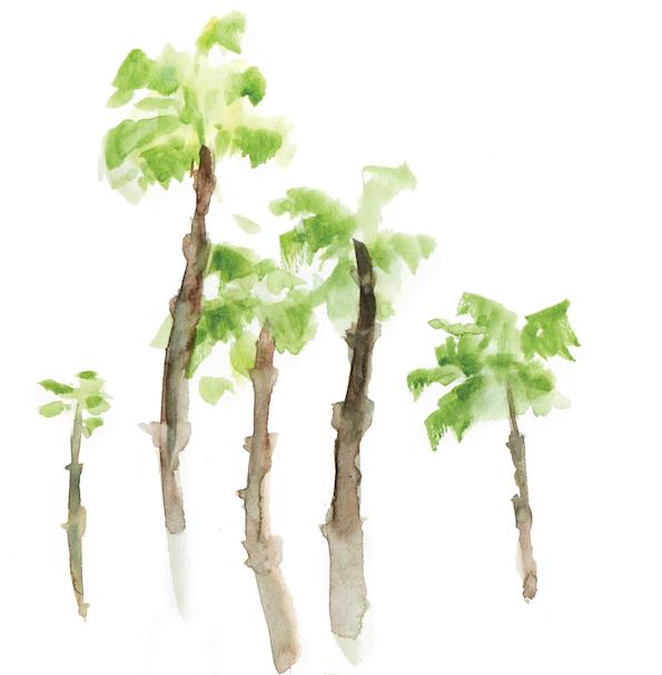 M - Trees-01